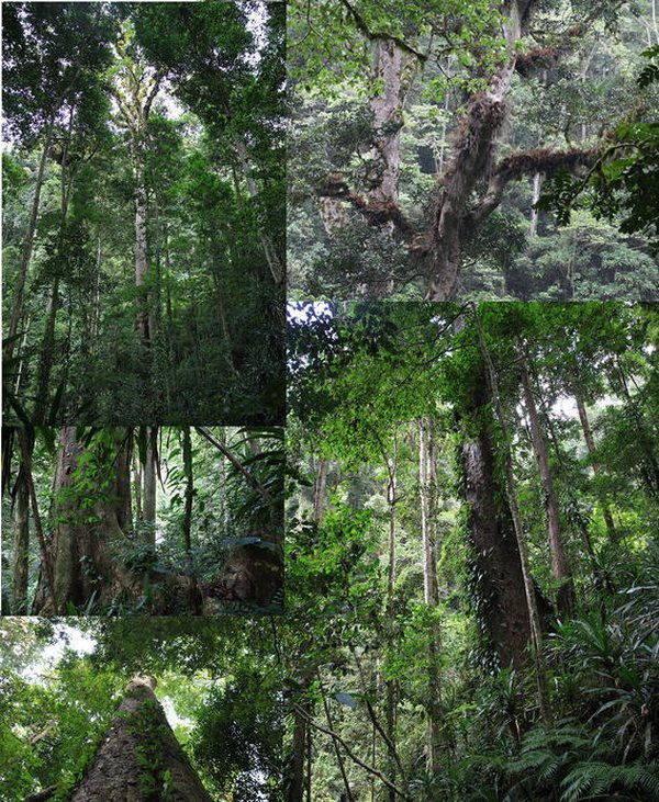 alberi africa 3