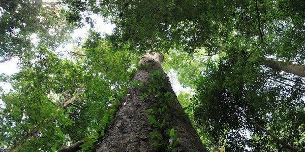 albero africa