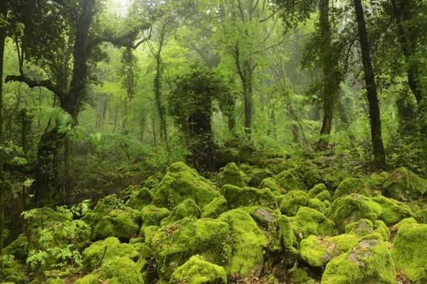 bosco sasseto1