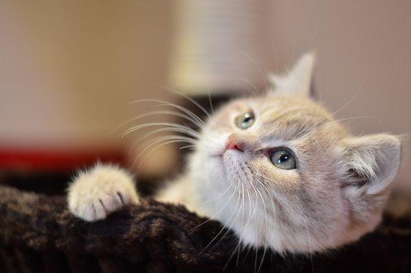 gatti 2