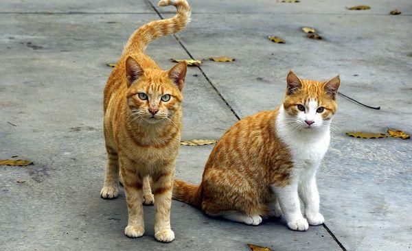 gatti 5