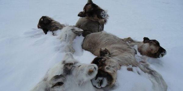 moria renne