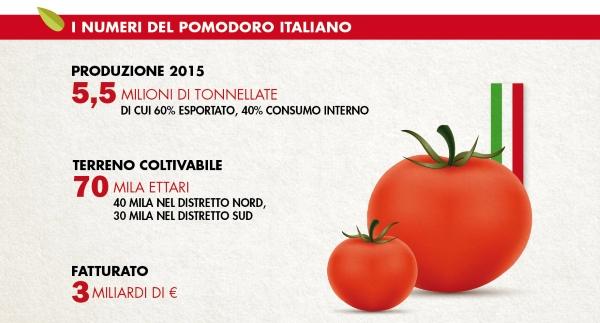 raccolta pomodori2
