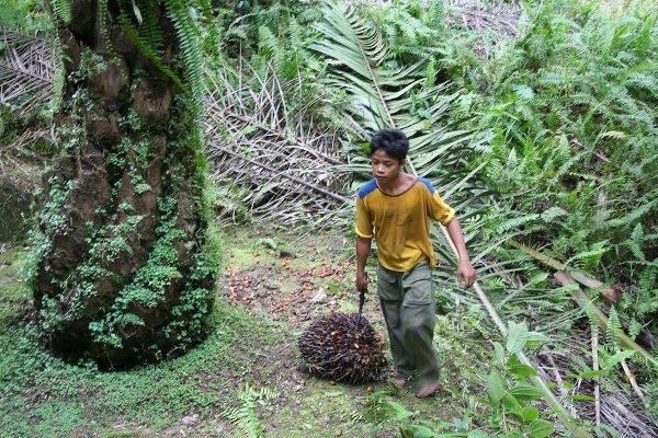 associazioni olio di palma