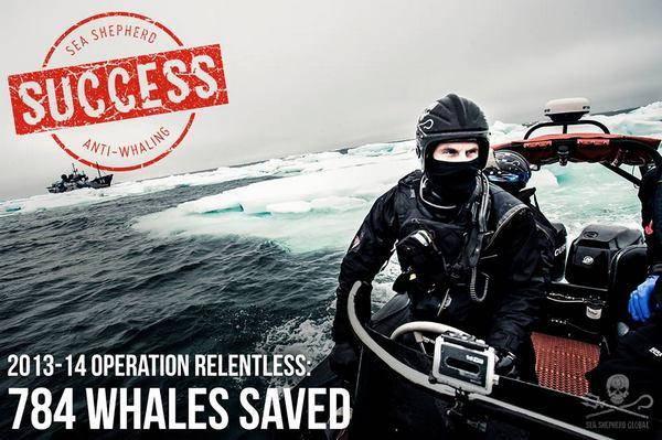 caccia balene giappone 3