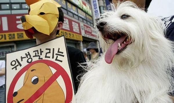 carne di cane 2