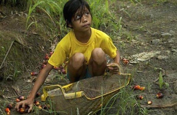 olio di palma sfruttamento minorile