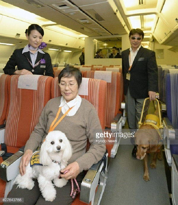 cani aereo