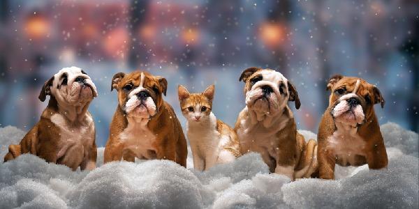 Cani e gatti freddo