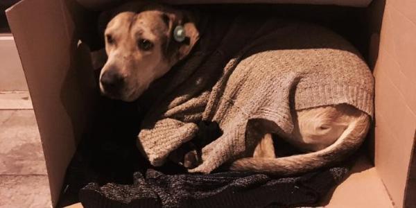 cani_senzatetto
