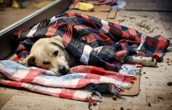 cani senzatetto1