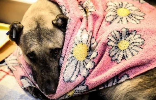 cani senzatetto2