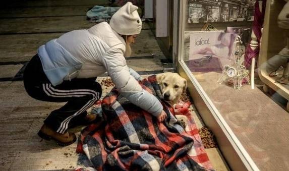 cani senzatetto3