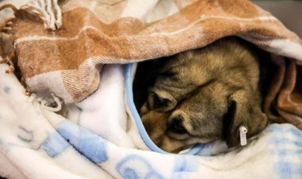 cani senzatetto5