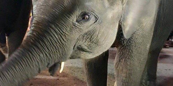elefanti tailandia