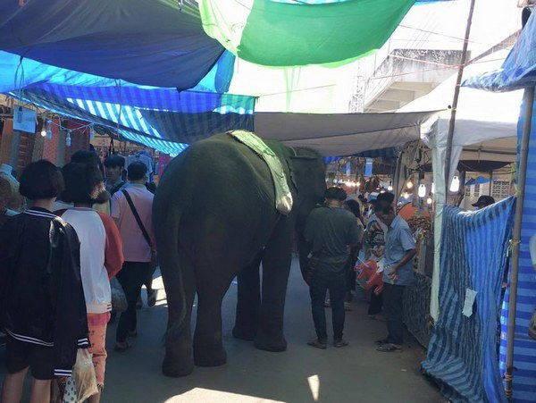 elefanti 6