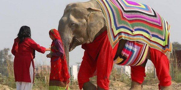 elefanti maglioni