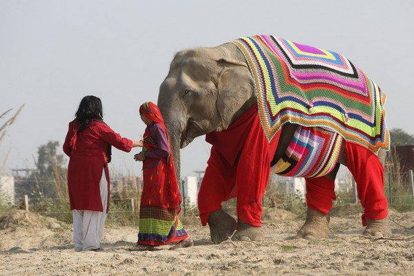 elefanti india 10