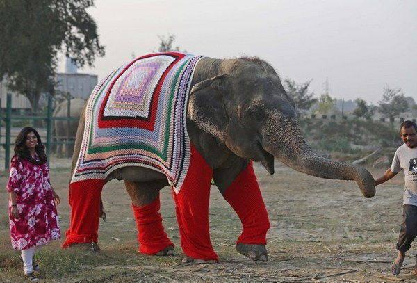 elefanti india 2
