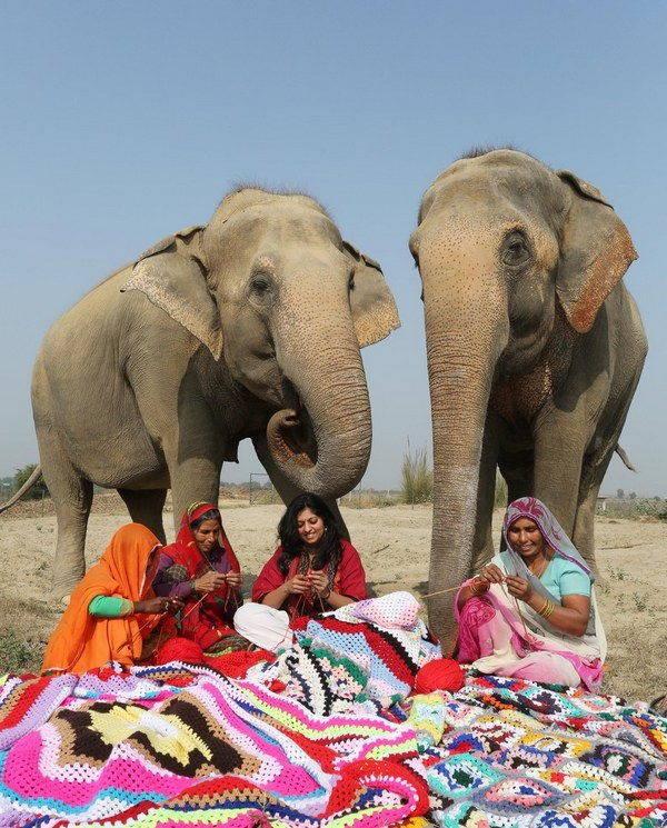 elefanti india 3