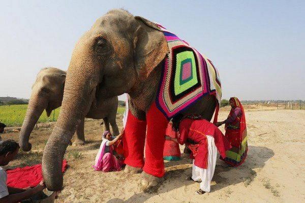 elefanti india 4