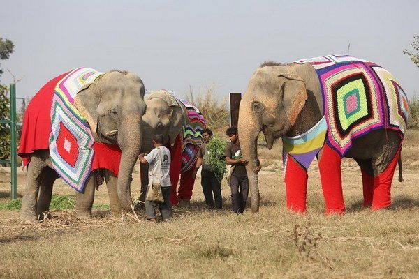 elefanti india 5