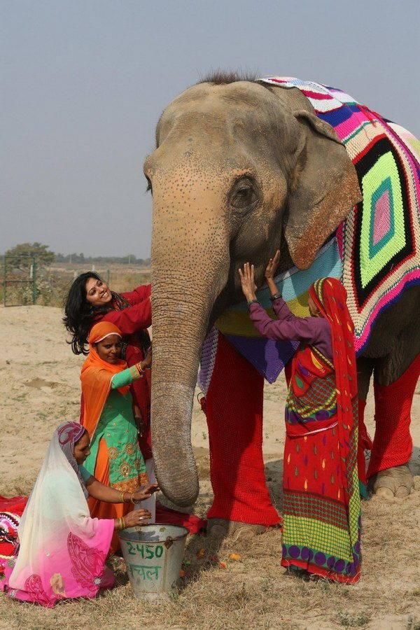 elefanti india 7