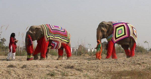 elefanti india 8
