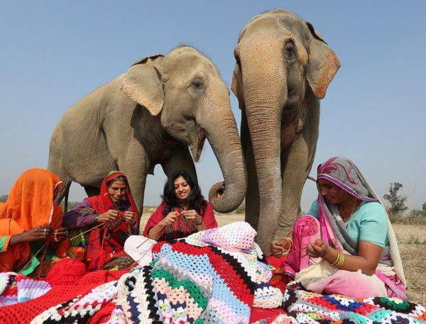 elefanti india 9