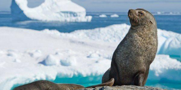 integratori omega 3 foche