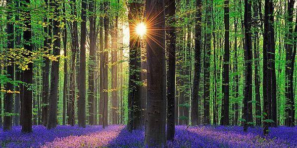 foreste respiro