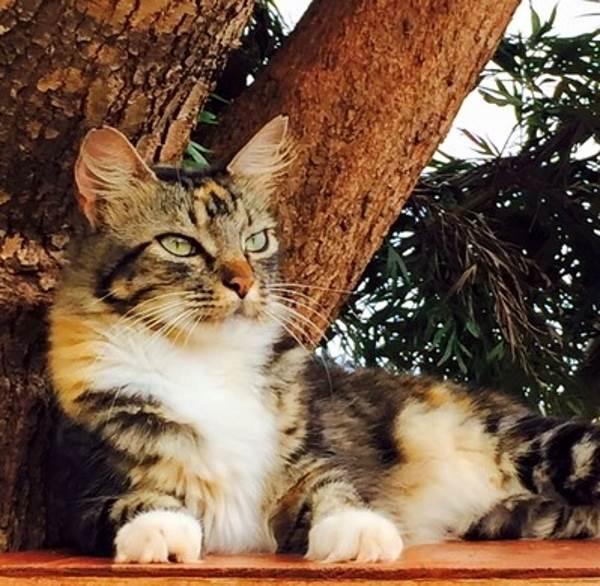 gatti rifugio hawai1