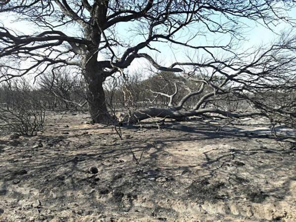incendi patagonia 4