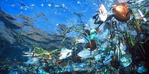 Plastica nei pesci