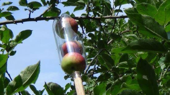 raccolgi frutta 7
