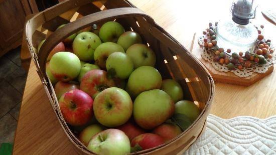 raccolgi frutta 8