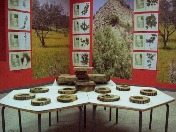 vallicupe musei
