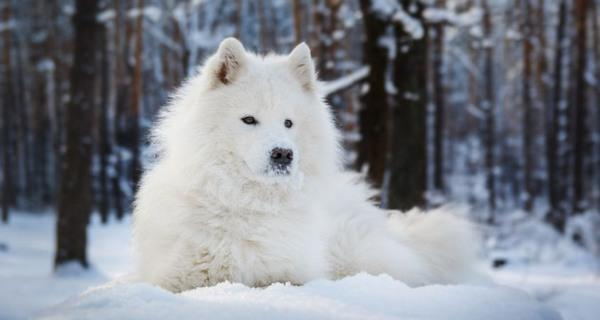 zampe cani freddo