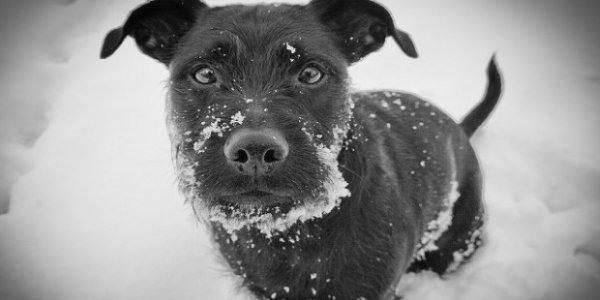 zampe cani freddo neve