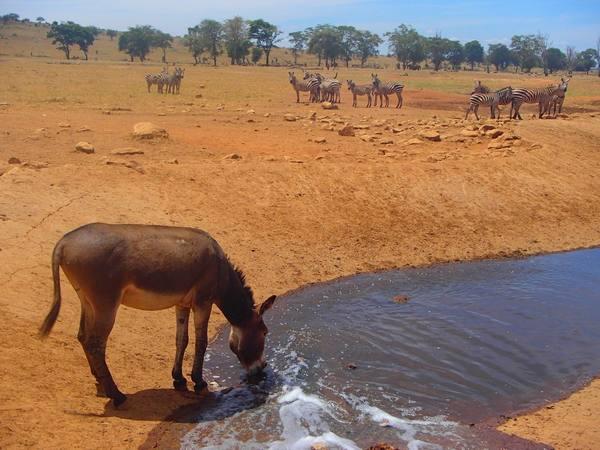 acqua animali 3