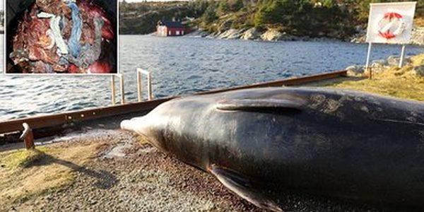 balena sacchetti plastica