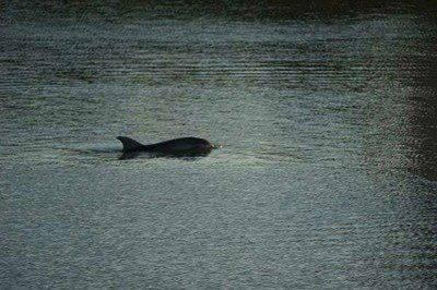 delfino arno2