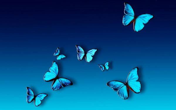 farfalla azzurra 1