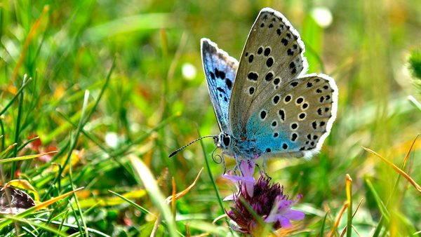 farfalla azzurra 2