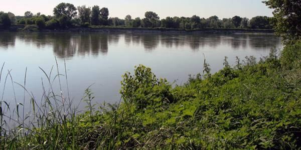 fiume po pesticidi