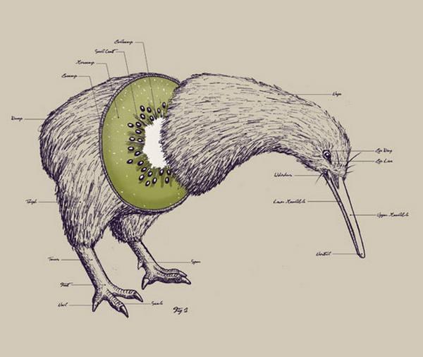 kiwi animale frutto 1