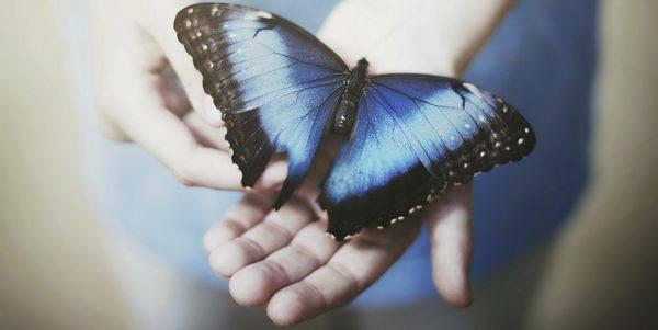 leggenda farfalla azzurra