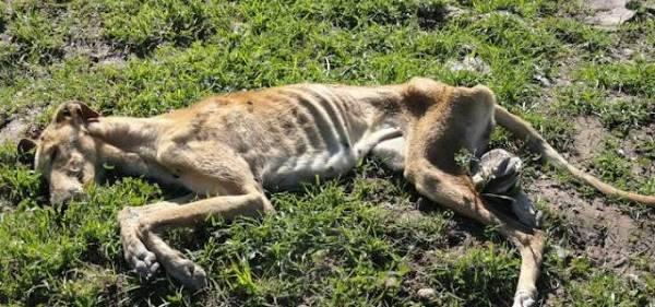 levrieri uccisi spagna1