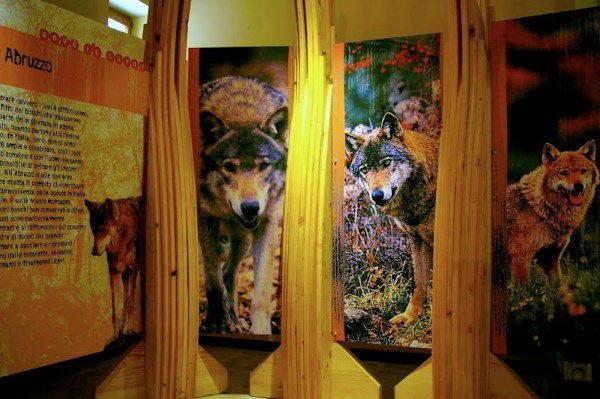 lupi popoli museo