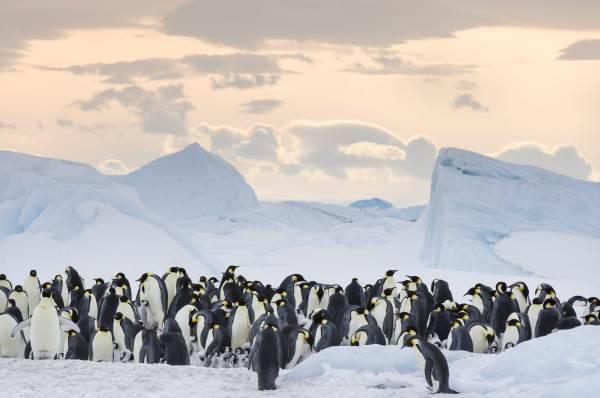 marcia dei pinguini1
